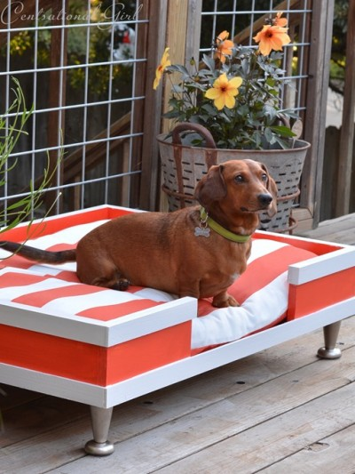 modern-pet-bed-striped-cushion.jpg