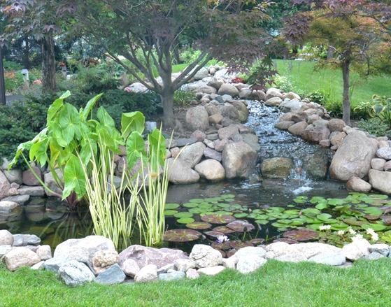 bhg garden pond