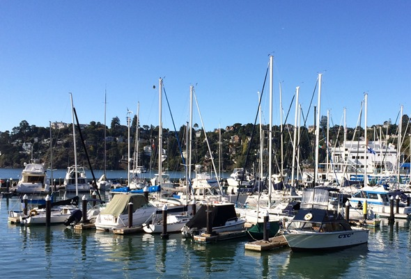 tiburon sailboats