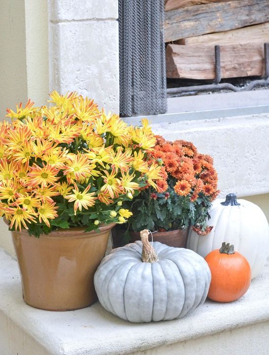 potted mums 2