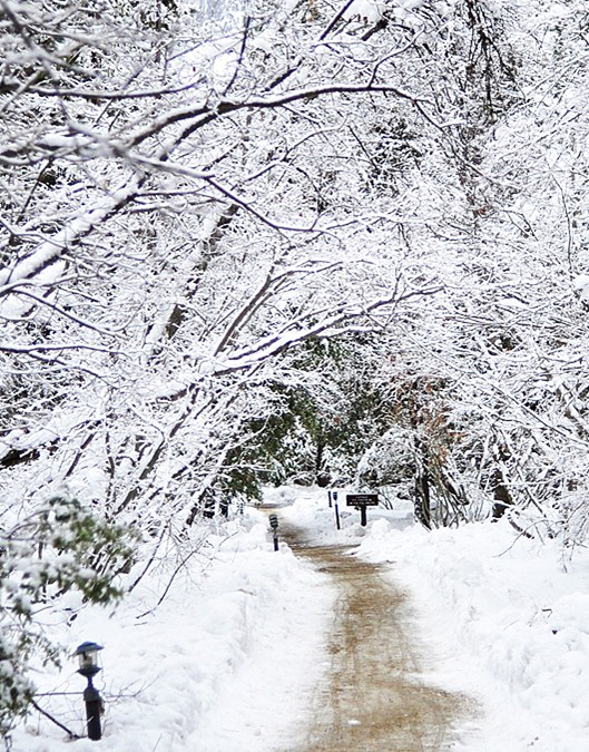 winter walk through snow