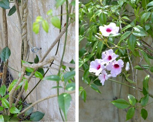 eye hook and bower vine