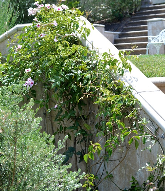 trellised bower vine
