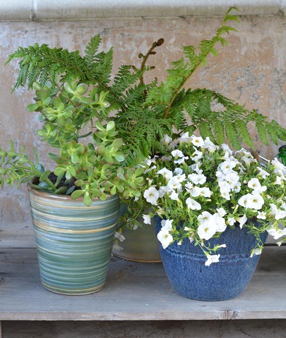 trio of plants
