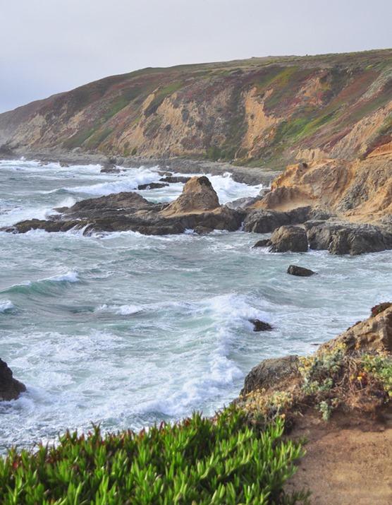 bodega coastline