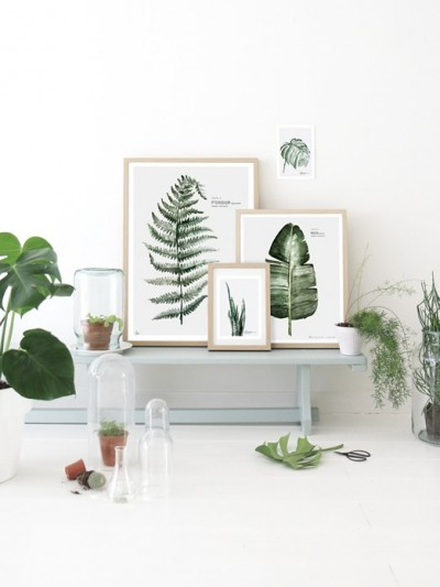 framed-fern-art-prints.jpg