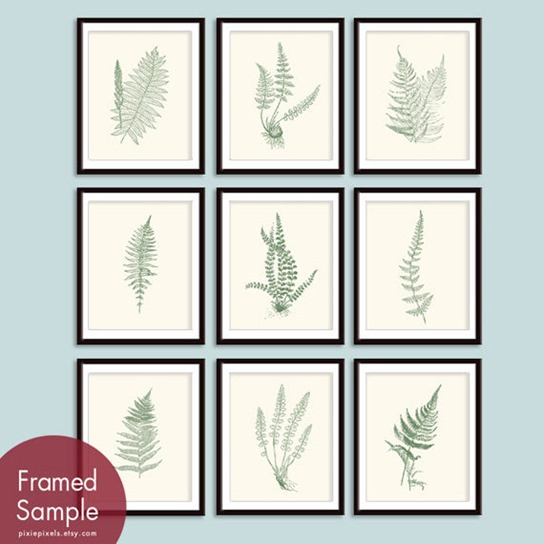 framed ferns pixie pixels