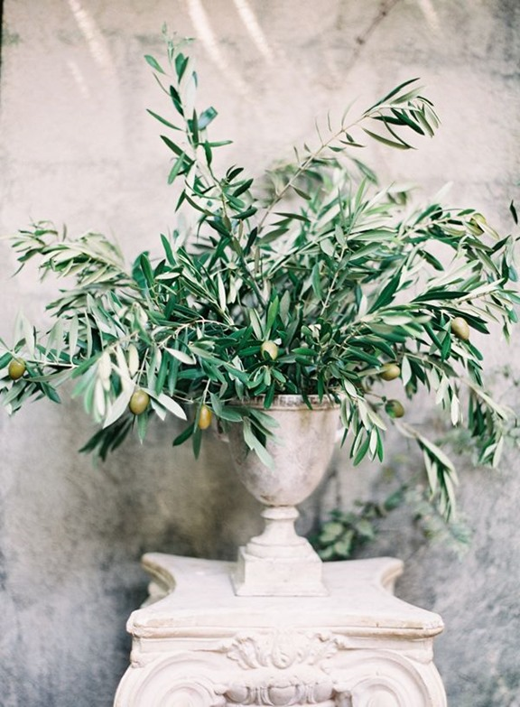 olive branches in urn