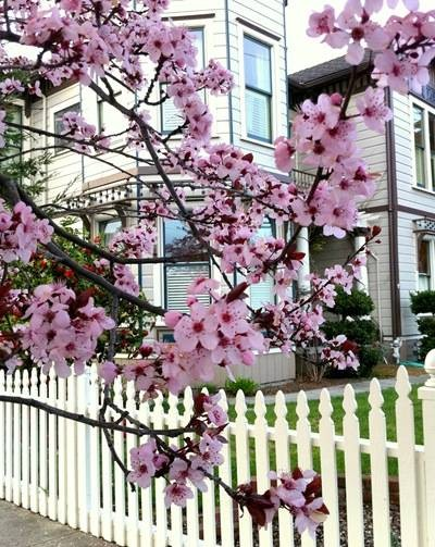 blossoms with house