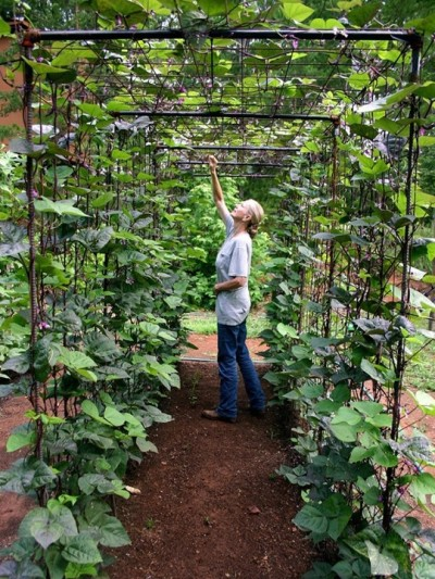 green bean trellis