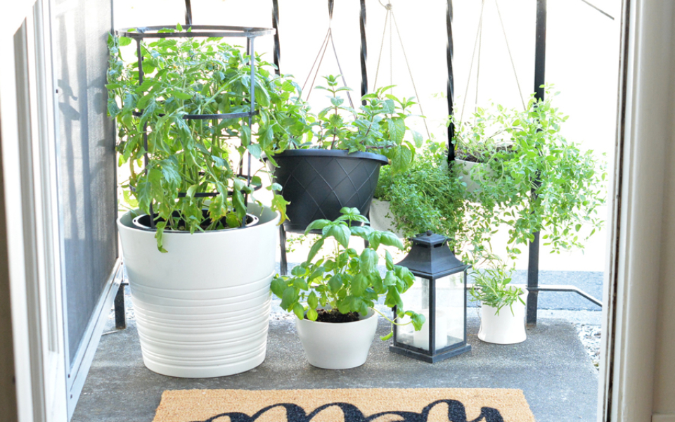 herb garden slider