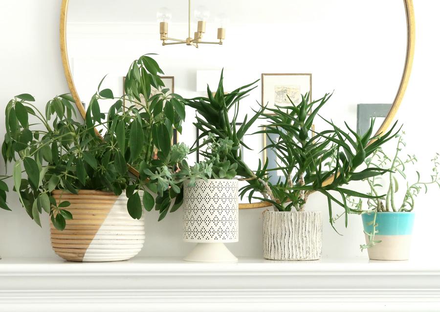 houseplants slider