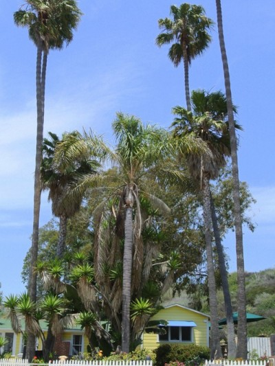 palm trees beach shack