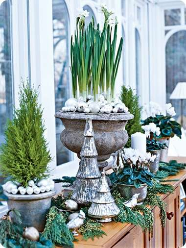 paper whites my home ideas