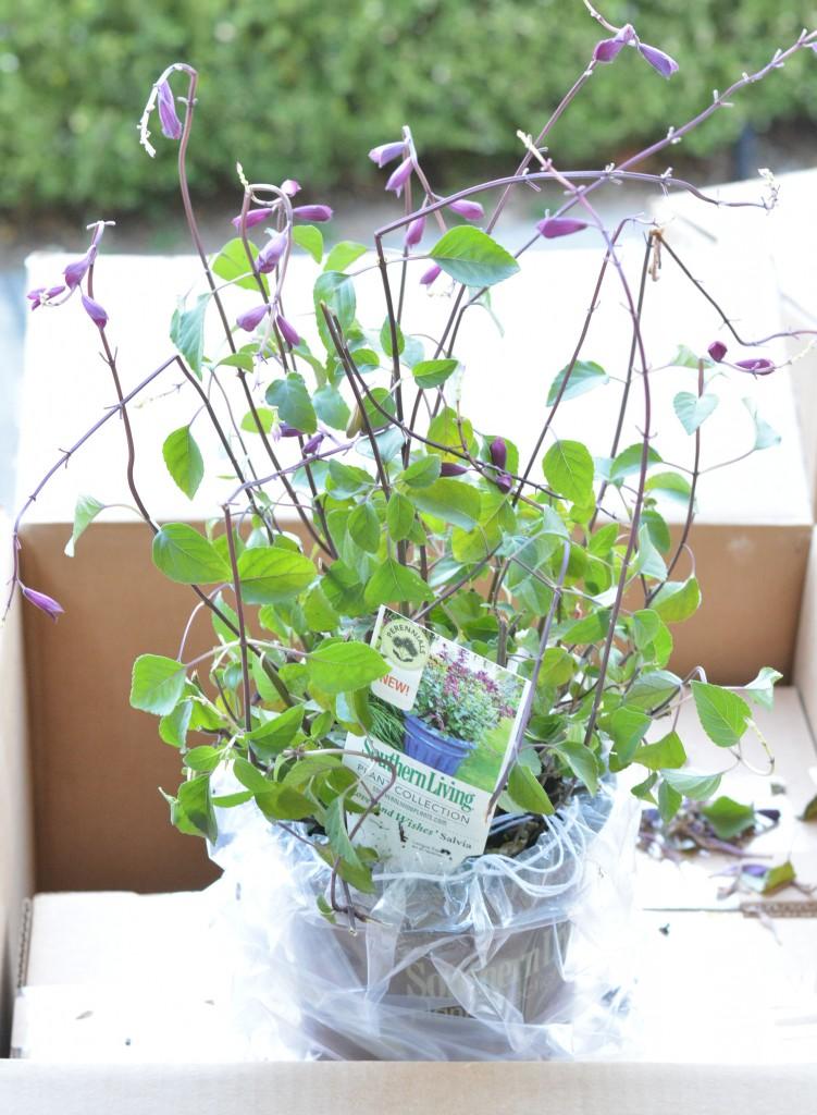 plants delivered 2
