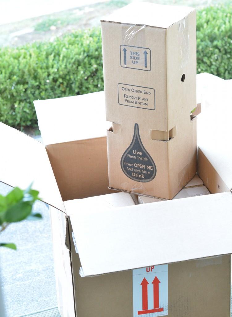 plants delivered