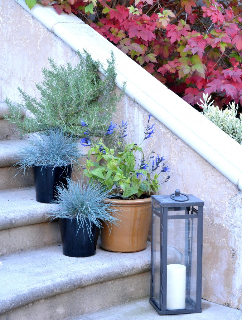 plants in pots on stairs