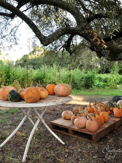 pumpkins on table cg