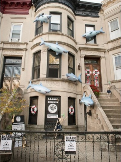 shark attack brooklynlimestone