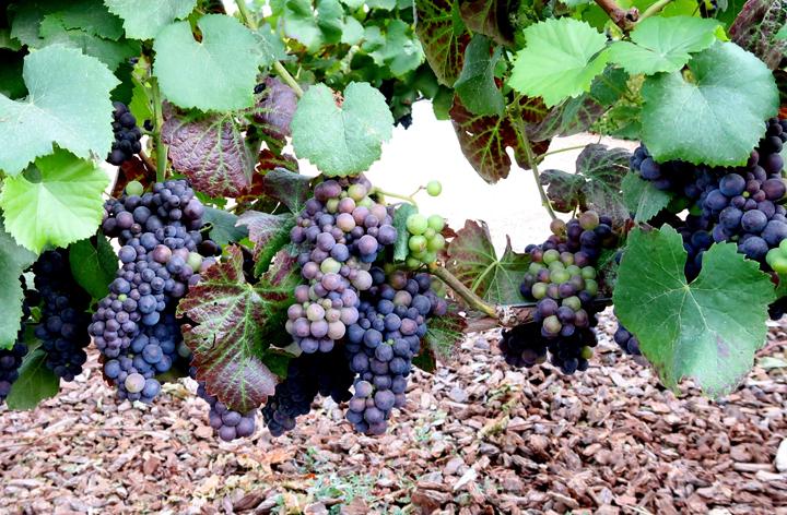 wineries slider