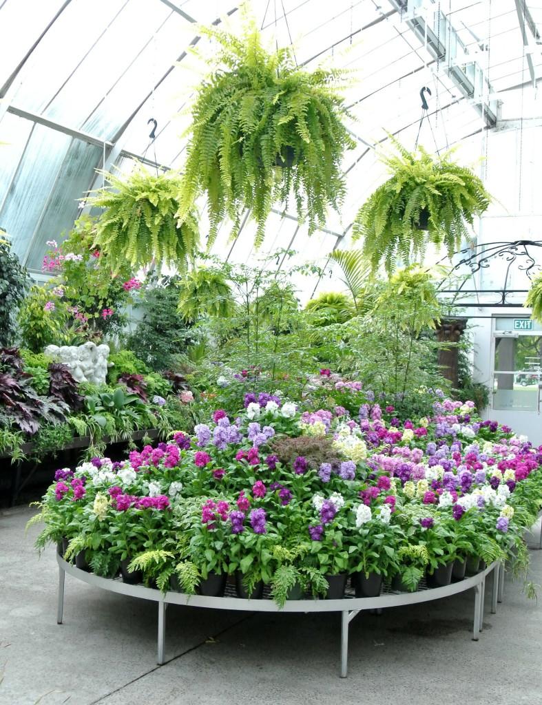 nz botanical