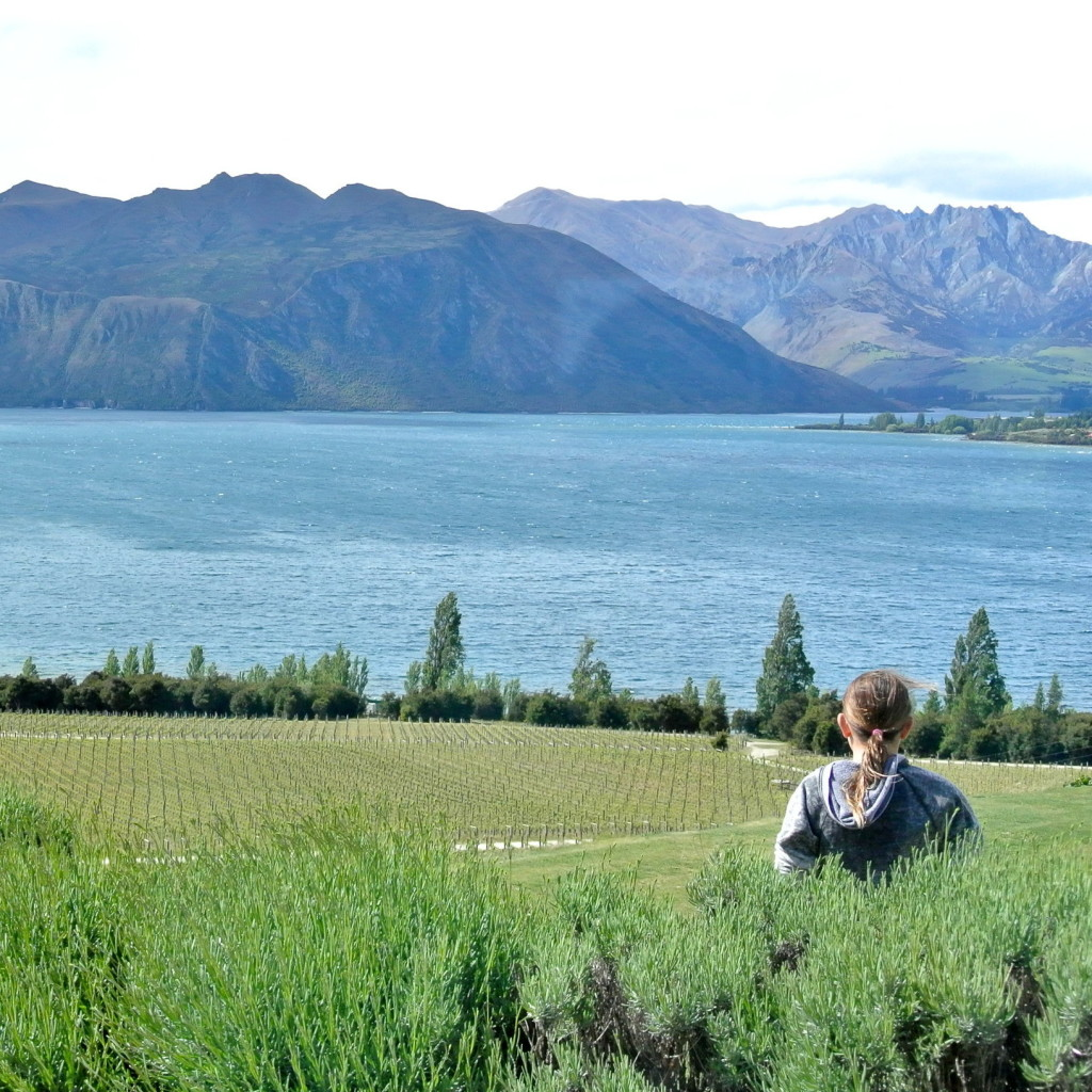 rippon winery view