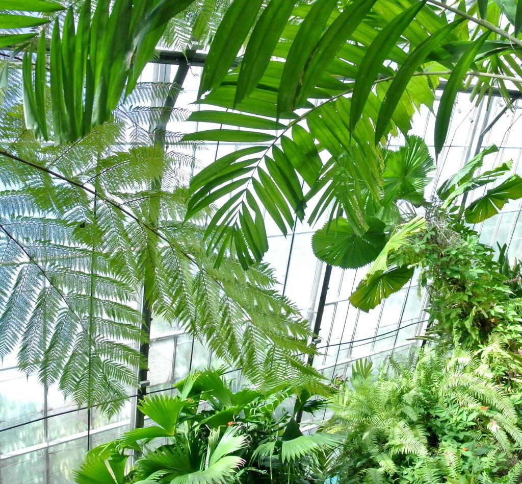butterfly garden aviary