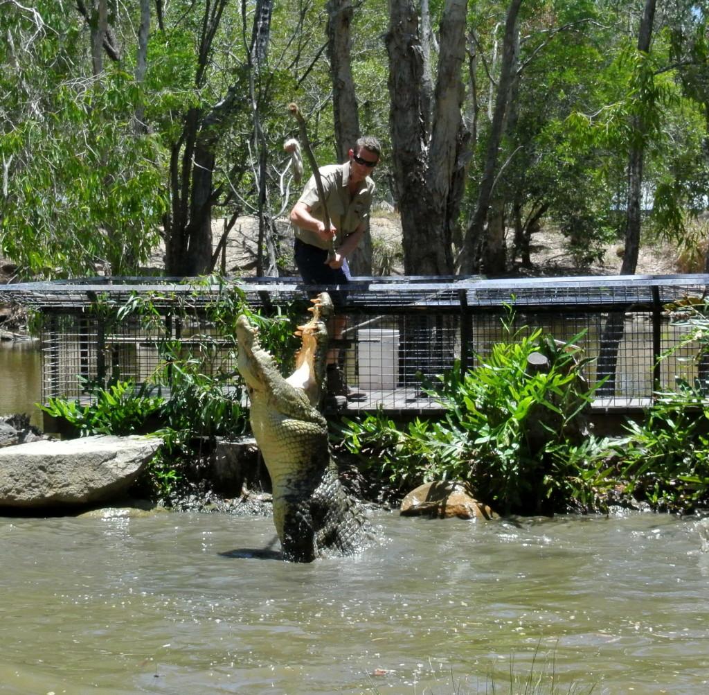 croc feed 4