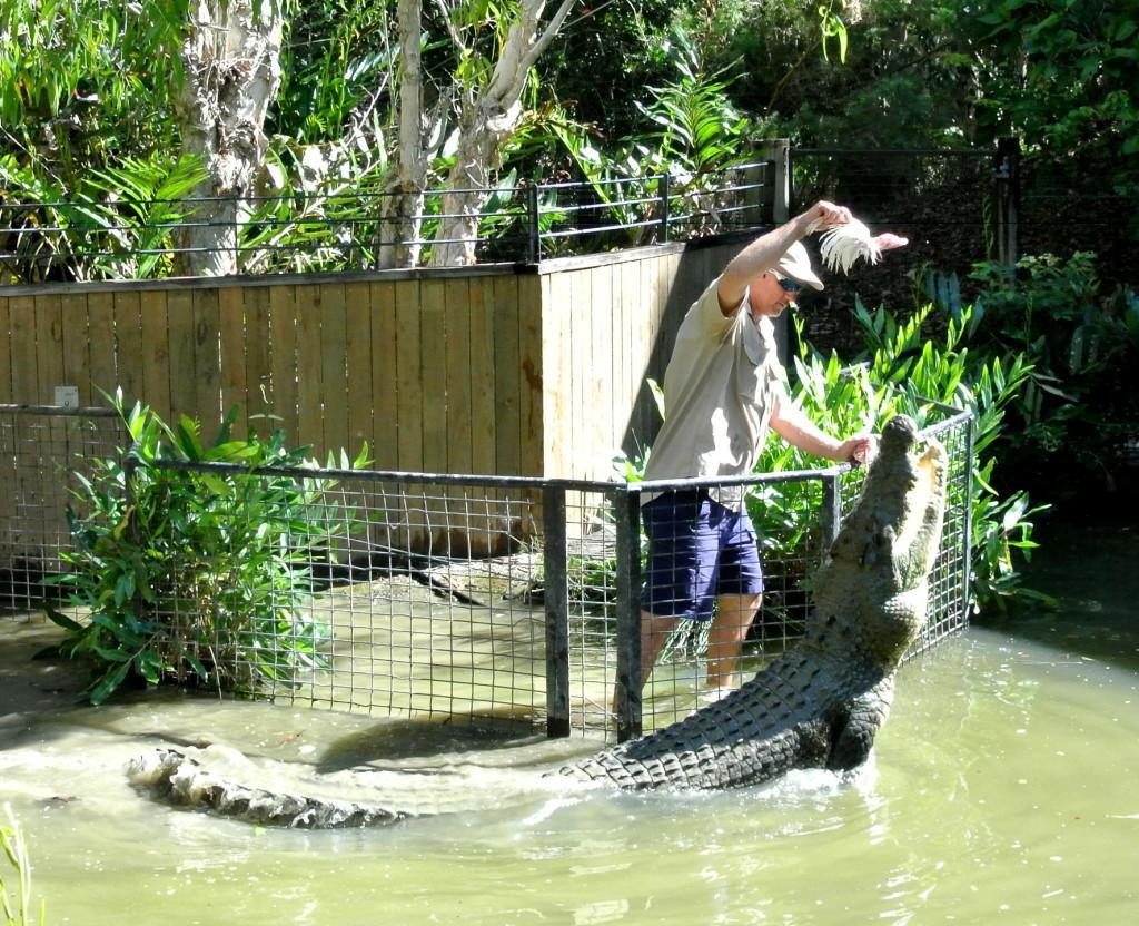 croc feeding