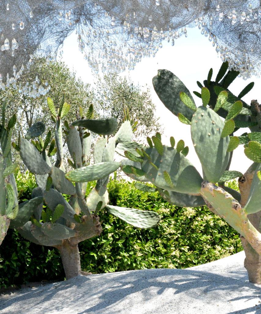 cactus wire garden