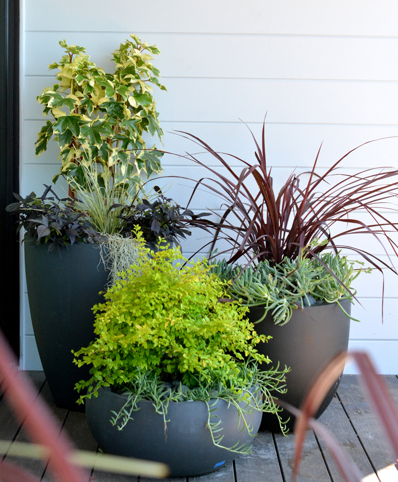 container plantings trio