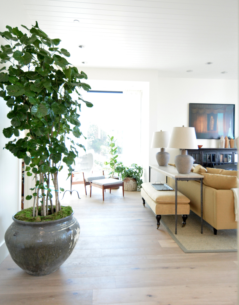 potted tree family room