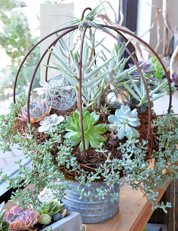 flourish iron orb succulents