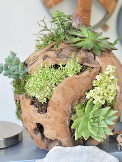 flourish wood ball succulents