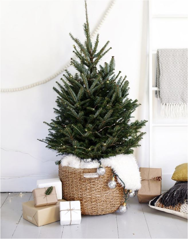 basket-with-evergreen-tree
