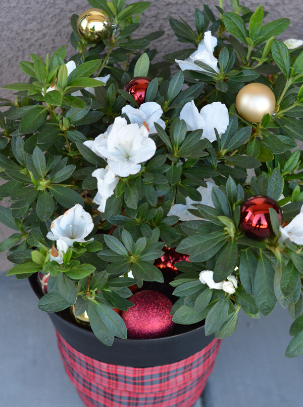 merry-gardenia-and-ornaments
